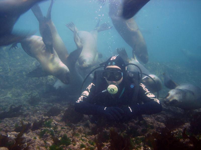 Buceo en Puerto Madryn con Lobos Marinos