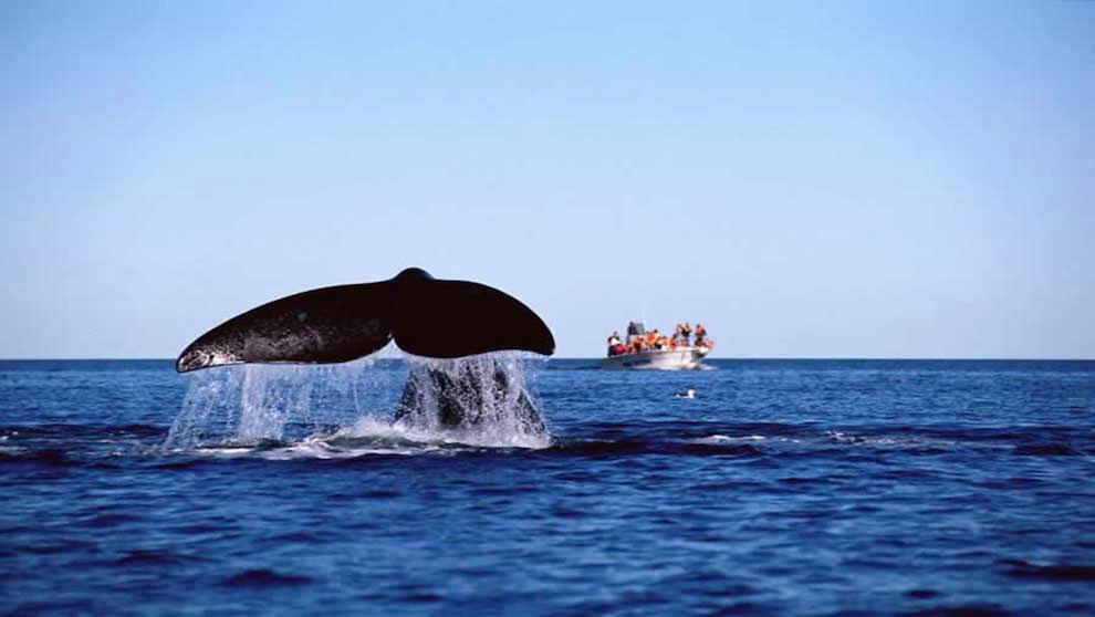 mejor temporada para avistar ballenas en Puerto Madryn