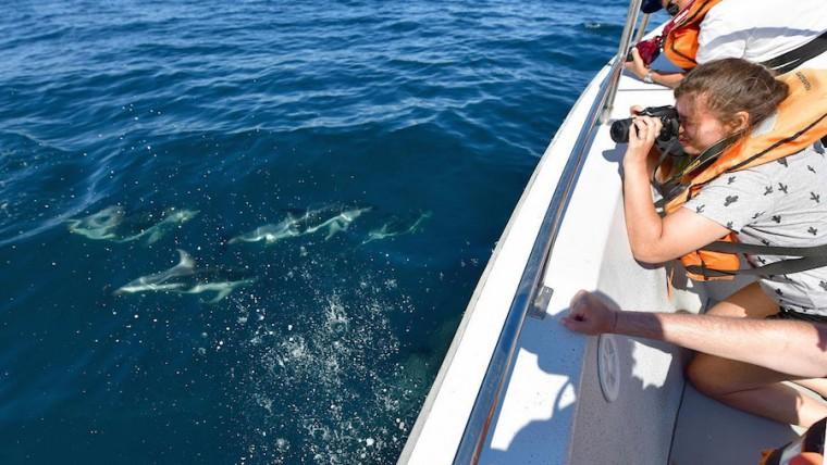 Avistaje de delfines en verano